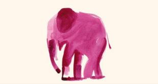 Elephant de Martin Suter paru chez Christian Bourgois