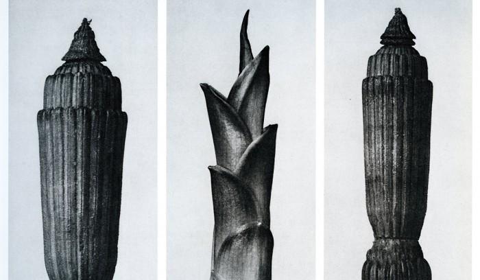 Le Jardin - Magnus Florin - Blossfeldt
