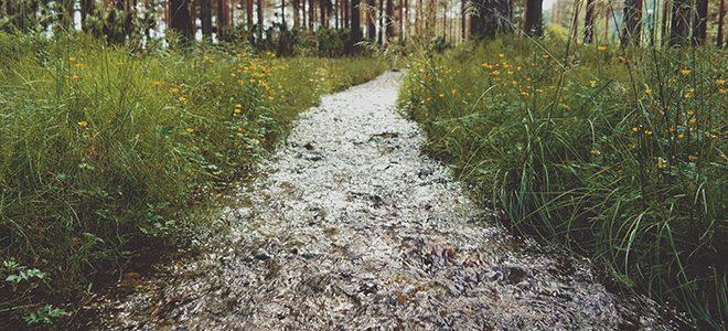 Ruisseau dans la forêt