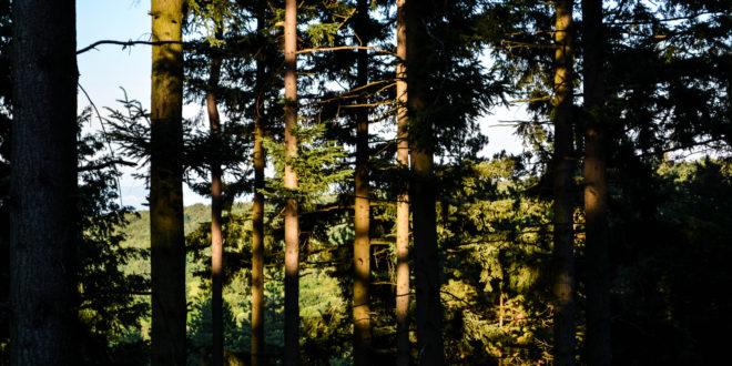 """Résultat de recherche d'images pour """"L'arbre monde Richard powers"""""""