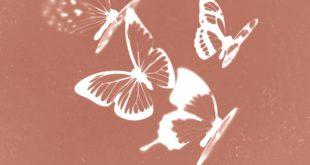 Dmitri Lipskerov, L'Outil et les Papillons - couverture