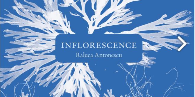 Raluca Antonescu Inflorescence couverture